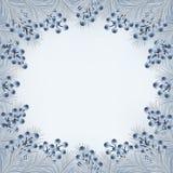 Vinterbakgrund med granfilialer och blåbäret gränsar Fotografering för Bildbyråer