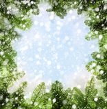 Vinterbakgrund med julgranen fattar Fotografering för Bildbyråer