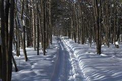 Vinterbana i skogen Arkivbilder