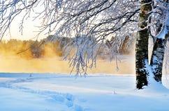 Vinterbjörk på banken Arkivfoto