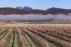 Vinterblåbärfält med moln och berg i Kanada Arkivbild
