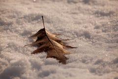 Vinterblad Arkivbilder