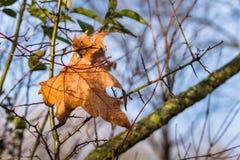 Vinterblad på en trädfilial på en Sunny Morning Royaltyfri Fotografi