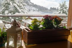 Vinterblommor Narodny Tatransky parkerar tatry vysoke slovakia royaltyfri bild