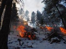 Vinterbrand i skogen royaltyfri foto