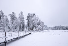 Vinterbro för snöig vit Royaltyfri Foto
