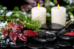 Vinterbrunnsortstilleben av evergreen förgrena sig, röda sidor med dro Royaltyfri Fotografi