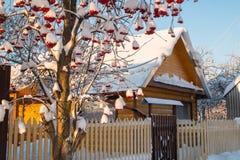 Vinterby och snö omkring Royaltyfria Bilder