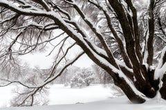 Vintercityscape i det snöig parkerar arkivfoto
