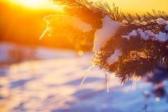 Vintercloseup av orange ljus för soluppgång arkivfoton