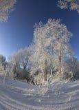 Vinterdag Royaltyfria Foton
