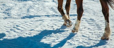 Vinterdag, fot springhäst Fotografering för Bildbyråer
