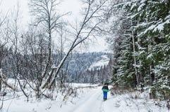 Vinterdag i träna Fotografering för Bildbyråer