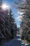 Vinterdag med solen Fotografering för Bildbyråer