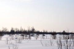 Vinterdag och frostig landskape från nord Nakna träd, sörjer och vit snö Arkivbilder