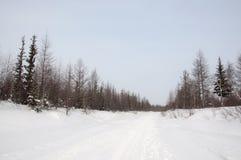 Vinterdag och frostig landskape från nord Nakna träd, sörjer och vit snö Royaltyfria Bilder
