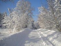 Vinterdag, snöig skog, frostiga modeller på träd, blå klar himmel, fluffig vit snö, den kommande julen, böja för trädfilialer royaltyfri fotografi