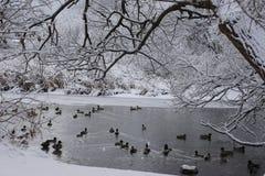 Vinterdammögonblick Arkivfoto