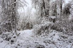 Vinterdjungel Arkivfoto