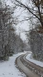 Vinterdrev royaltyfri fotografi