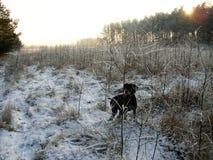 Vintereftermiddag i skogen arkivfoto