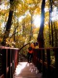 Vinterensamhet: Guld- dedciduous skog av Chiang Mai, Thailand Arkivfoto