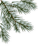 Vinterevergreen tränga någon design Arkivbild