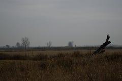 Vinterfält, en träfilial lämnade ensam trevlig sammansättning Royaltyfria Foton