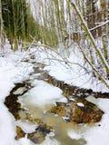 Vinterfärger Royaltyfria Bilder