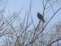 Vinterfågel Fotografering för Bildbyråer