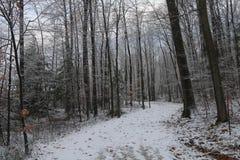 Vinterförtitt Fotografering för Bildbyråer