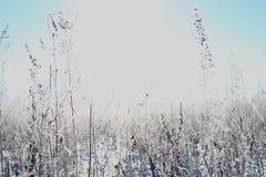 Vinterfantasi Royaltyfri Fotografi