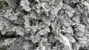 Vinterfilial Royaltyfri Fotografi