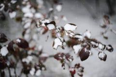 Vinterfilialer av ett träd Arkivfoton