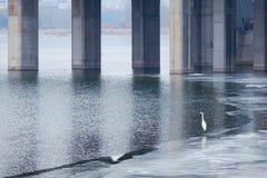 Vinterflodlandskap arkivfoton