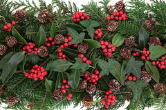 Vinterflora Royaltyfri Fotografi