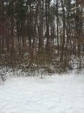 Vinterfoilage Arkivbilder