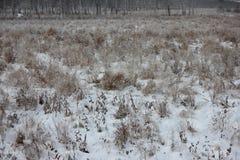 Vinterfoto Arkivfoto