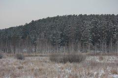 Vinterfoto Fotografering för Bildbyråer