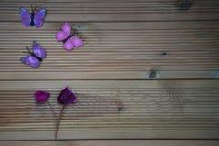 Vinterfotografibild av rosa purpurfärgade cyklamenblommor och roliga leksakfjärilar på lantlig wood bakgrund och utrymme Royaltyfri Bild