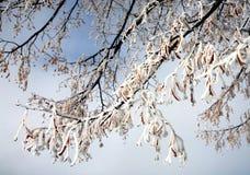Vinterfrost arkivbilder