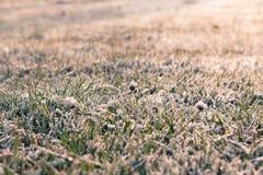 Vinterfrost Arkivbild