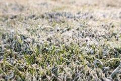 Vinterfrost Royaltyfri Bild