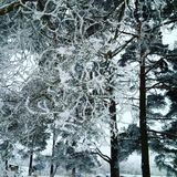 Vinterfrost i kall snöig dag! arkivbild