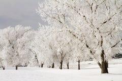 Vinterfrost och snö på träd Arkivfoto