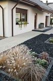 Vinterfrost på dekorativt gräs för främre gård royaltyfri bild