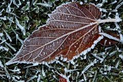 Vinterfrost på bladet Arkivfoto