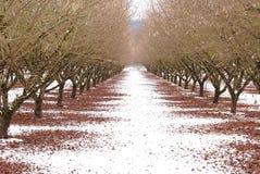 Vinterfruktträdgård fotografering för bildbyråer