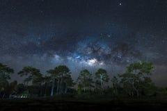 Vintergatan över sörjer träd Royaltyfri Bild