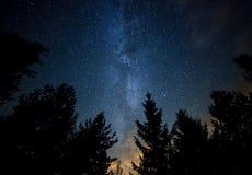 Vintergatan över skogen Arkivbild
